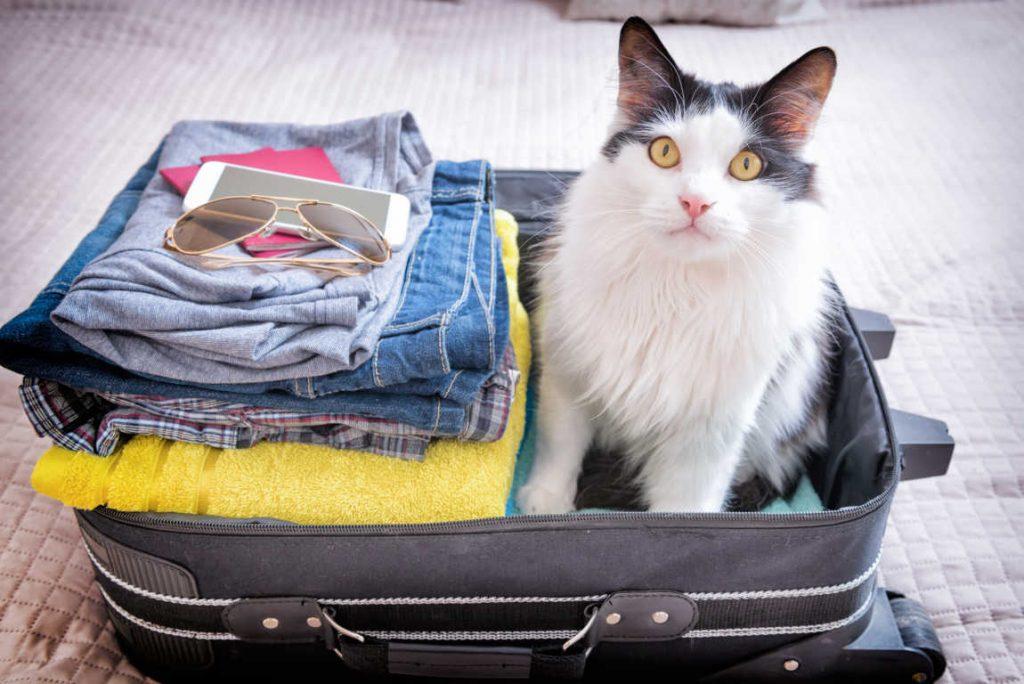 Transporte de mascotas abandonadas a países europeos